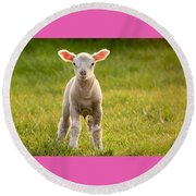 Larry Lamb And His Lovely Pink Ears. Round Beach Towel