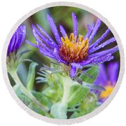late Summer Fleabane Round Beach Towel