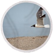 Laughing Gull In Flight Round Beach Towel