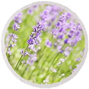 Lavender Blooming In A Garden Round Beach Towel