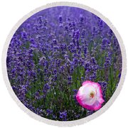 Lavender Field With Poppy Round Beach Towel