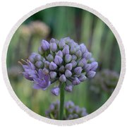 Lavender Flowering Onion Round Beach Towel