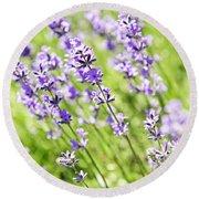 Lavender In Sunshine Round Beach Towel by Elena Elisseeva
