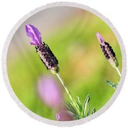 Lavender In The Sun Round Beach Towel