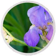 Lavender Iris On Green Round Beach Towel
