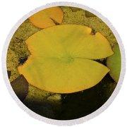 Leaf On A Pond Round Beach Towel