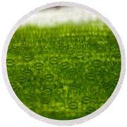Leaf Stomata, Lm Round Beach Towel