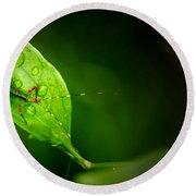 Leafhopper 3 Round Beach Towel