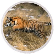 Leaping Siberian Tiger Round Beach Towel