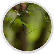 Leaves And Thorns Round Beach Towel