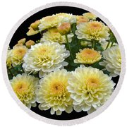 Lemon Meringue Chrysanthemums Round Beach Towel