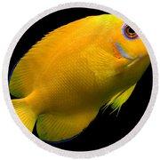 Lemonpeel Angelfish Round Beach Towel