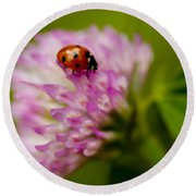 Lensbaby Ladybug On Pink Clover Round Beach Towel