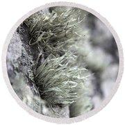 Lichen Niebla Podetiaforma Round Beach Towel