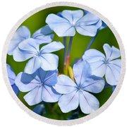 Light Blue Plumbago Flowers Round Beach Towel by Carol Groenen