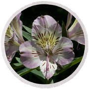 Lily - Liliaceae Round Beach Towel