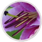 Lily In Full Bloom Round Beach Towel