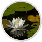 Lily On The Pond Round Beach Towel