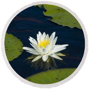 Lily Pad And Flower Round Beach Towel