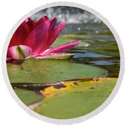 Lily Pads And Petals Round Beach Towel