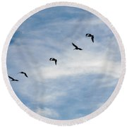 Linear Flock Of Pelicans Round Beach Towel