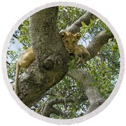 Lion Lookout Round Beach Towel