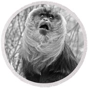 Lion Tailed Macaque Round Beach Towel