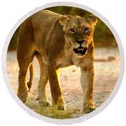 Lioness Round Beach Towel