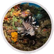 Lionfish, Fiji Round Beach Towel