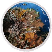 Lionfish, Indonesia Round Beach Towel