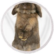 Lionhead Rabbit Round Beach Towel