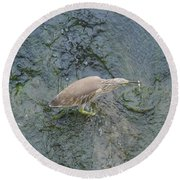 Little Bittern Round Beach Towel