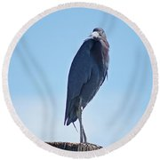 Little Blue Heron II Round Beach Towel