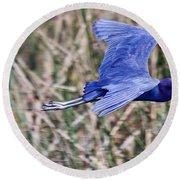Little Blue Heron In Flight Round Beach Towel