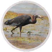 Little Blue Heron In Swamp Round Beach Towel