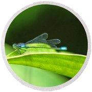 Little Dragonfly Round Beach Towel