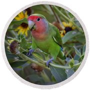 Little Lovebird Round Beach Towel