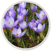 Little Purple Crocuses Round Beach Towel