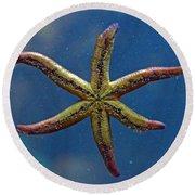 Live Starfish Round Beach Towel