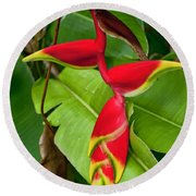 Lobster Claw Heliconia Round Beach Towel