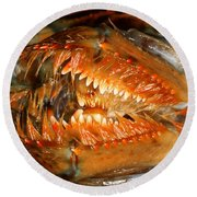 Lobster Mouth Round Beach Towel