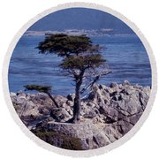 Lone Cypress By The Sea Round Beach Towel