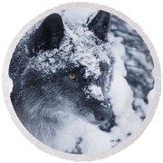 Lone Wolf In Snow Round Beach Towel