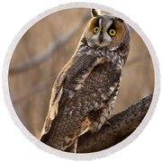 Long-eared Owl Round Beach Towel