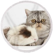 Long-haired Guinea Pig And Silver Tabby Round Beach Towel