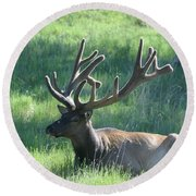 Lounging Elk Round Beach Towel
