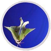 Luna Moth In Flight Round Beach Towel
