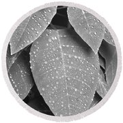 Lush Leaves And Water Drops 2 Bw Round Beach Towel