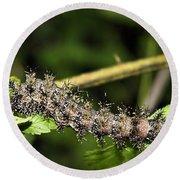 Lymantria Dispar Gypsy Moth Larva Round Beach Towel