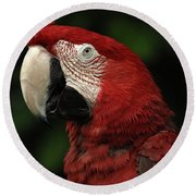 Macaw In Red Round Beach Towel